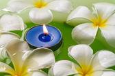 Плюмерия цветы ароматические свечи — Стоковое фото
