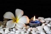 Plumeria květy vonné svíčky — Stock fotografie