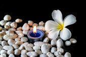 鸡蛋花的花朵香味的蜡烛 — 图库照片