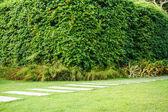 Herbe verte dans le parc — Photo