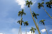 Palm trees in the garden — Stock Photo
