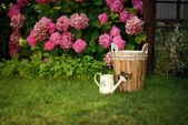 Bucket and watering can — Stock Photo