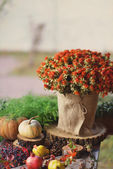 Flowers and pumpkin — Stock Photo