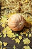 Pumpkin and yellow leaves — Stock Photo