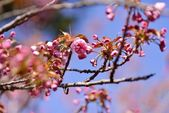 Branch of cherry blossoms — Stock Photo