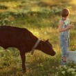 Boy on field with calf — Stock Photo #74196355