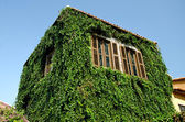 Ancient house covered by green leaves — Stock fotografie