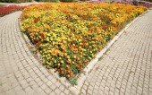 Multicolored flower in garden — Stock Photo