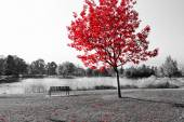 Red Tree Over Park Bench — Stock Photo
