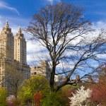 Spring Landscpe in Central Park New York — Stock Photo #71884059