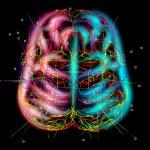 Brain mysteries — Stock Vector #78455918