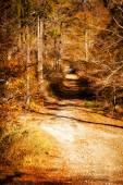 Beautiful autumn mountain woods landscape — Stock Photo