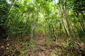 Jungle trekking on Koh Phangan — Stockfoto