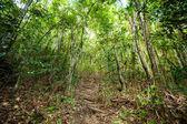 Jungle trekking on Koh Phangan — Stock Photo
