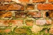 Brick wall moss — Stock Photo