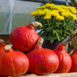 Red squash on display at a fall festival — Stock Photo #54902119