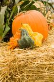 Gourds and orange pumpkin on hay — Stock Photo