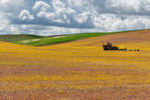 Agricultural fields with tractor — Stock Photo