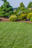 Lawn and landscaped garden — Stock Photo