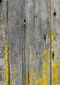 Vertical weathered boards with lichen  for use as texture — Stock Photo