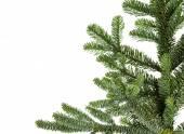 Noble fir bough for corner border — Stock Photo