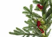 Noble fir bough with holly — Stock Photo