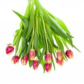 Bouquet of pink and yellow tulips on white — Stock Photo