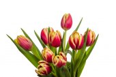 Bouquet of pink and yellow tulips — Stock Photo