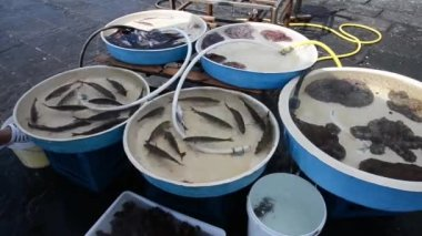 Naples fisherrmen — Stock Video