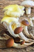Mix of mushrooms — Stock Photo