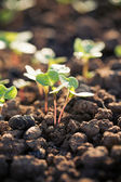 Seedling growth — Stock Photo