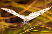 Butterfly on blurred background — Stock Photo