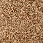 Grain of wheat — Stock Photo