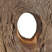White hole in the tree — Stock Photo