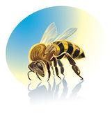 Illustration of bee — Stock Vector