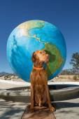 Dog at the tropic od Cancer — Stock Photo
