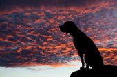 Sitting dog in the sunset — Stock Photo
