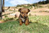 Cute little puppy — Stock Photo