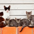 Nice family of cats resting — Stock Photo #51966731
