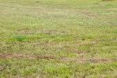 Meadow full of green grass — Stock Photo