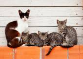 Nice family of cats resting — Stock Photo