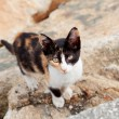 Stray cat black and brown l — Stock Photo #55045613