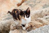 Stray cat black and brown l — Stock Photo