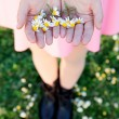 Woman hands holding a daisies — Stock Photo #71081297