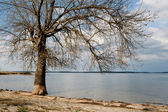 Dry tree at the foot of a lake  — Stock Photo
