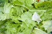 Delicious salad of lettuce leaves — Stock Photo