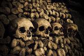 Skulls and bones — Stock Photo