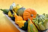 Close up of pumpkin variety. — Stock Photo
