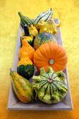 Multiple baby pumpkins. — Stock Photo
