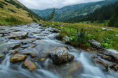 Pastoral mountain scenery and fir trees in the Alps, in summer — Stock Photo